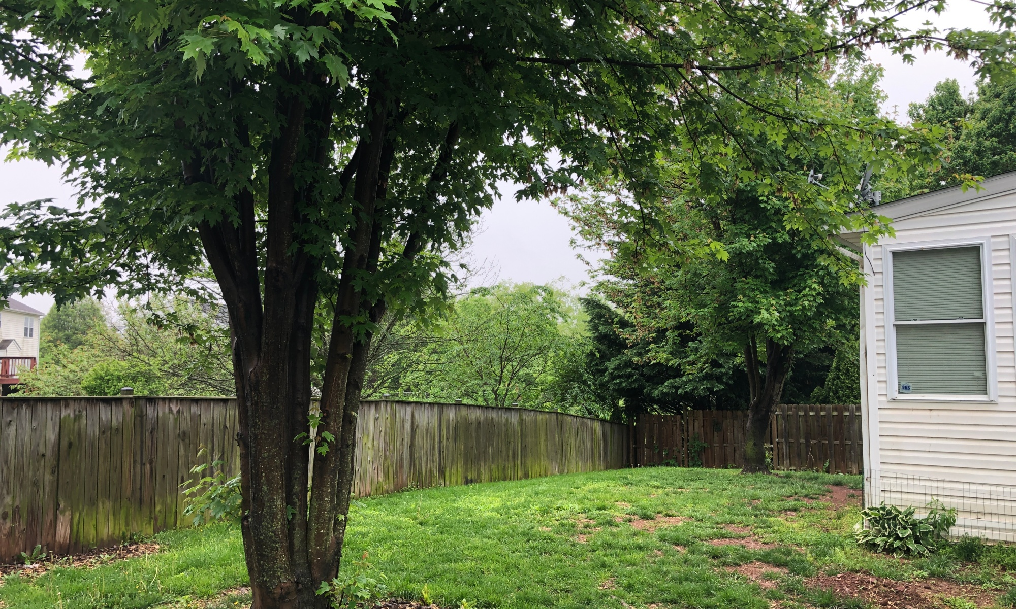 Backyard Prior to Tree Removal